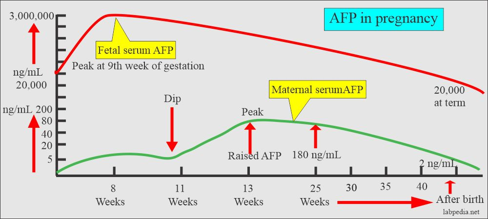 Alpha Fetoprotein Maternal Afp A1 Fetoprotein And Its Significance Labpedia Net