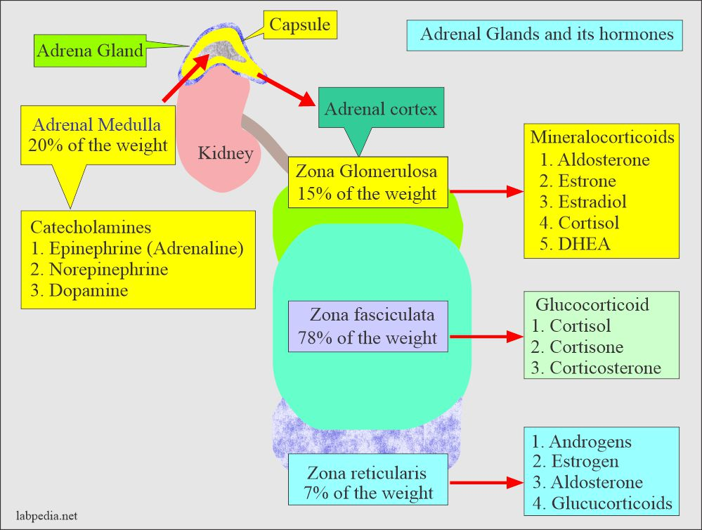 What steroid is an adrenal cortical hormone side effects from steroids injections